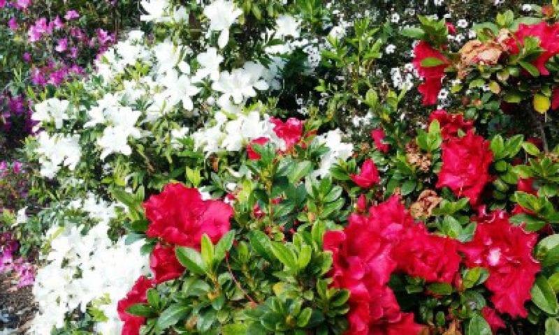Gardeners Delight Baunti Escapes