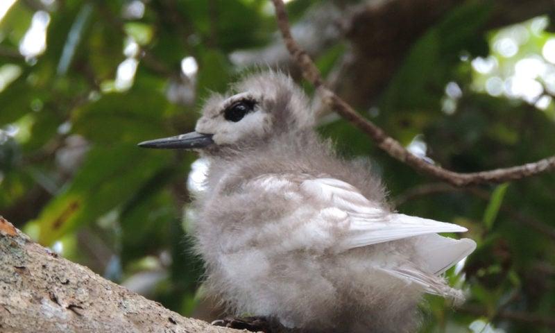 Norfolk Island Natural Wonders And Birdfinding Tour GreenEyes Tours