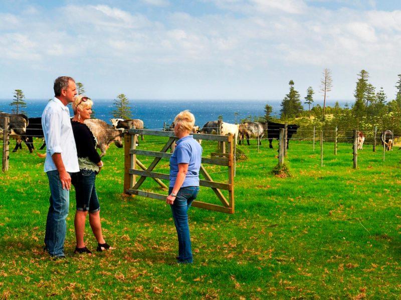 Norfolk Island Travel Centre Couple Cows Farm Tour 3