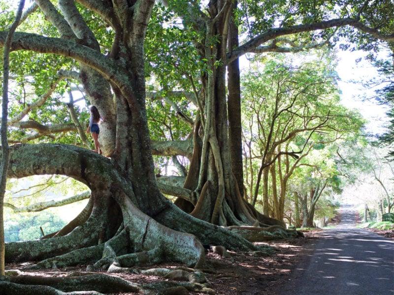 Norfolk Island Travel Centre Tourism B Photos2