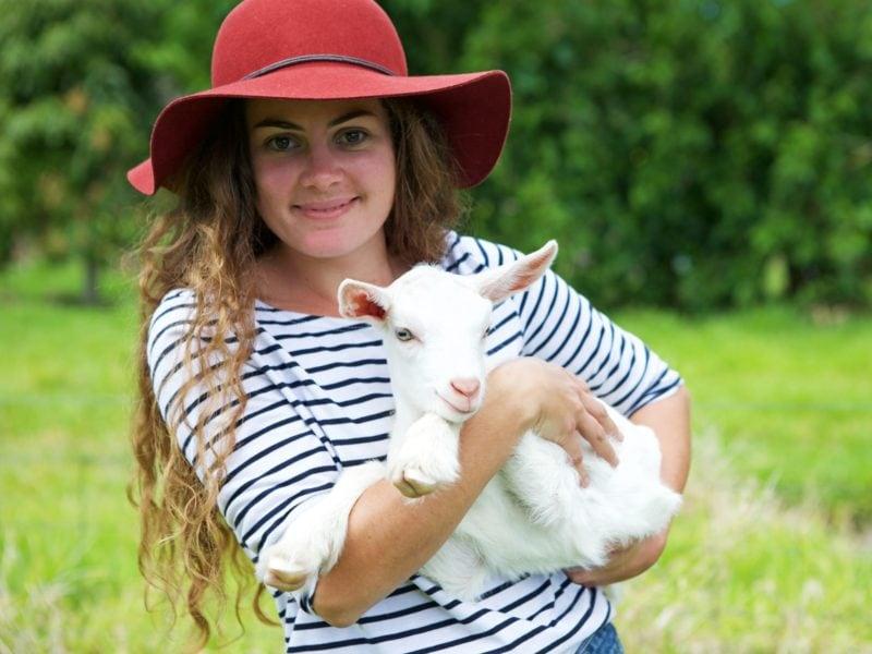 Holding Goat Norfolk Island